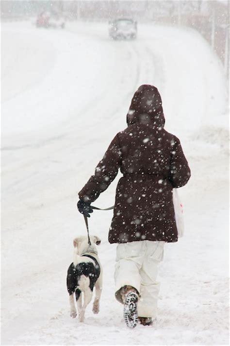 kitsap humane society winter pet safety tips