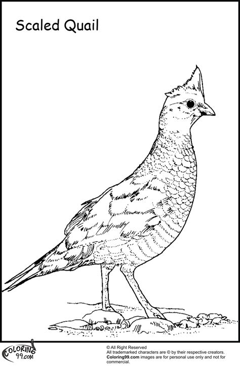 quail coloring pages minister coloring