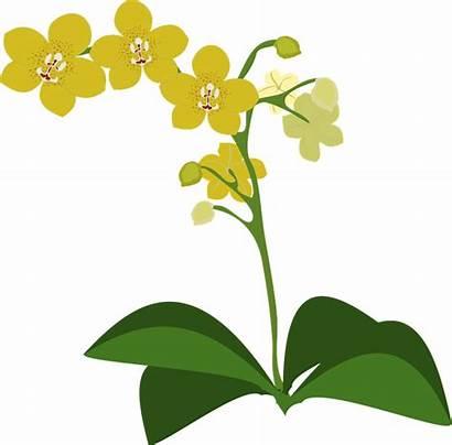 Clipart Clip Nature Orchid Transparent Anggrek Flora