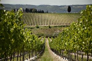 Chianti Lovers, Rejoice: Here Are the Best Antinori Winery Tours