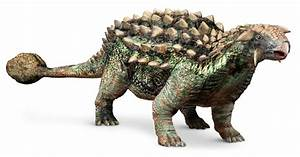 Ankylosaurus Facts For Kids Dk Find Out