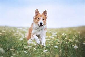 Zeit Für Frühling : der fr hling ist da zeit f r heuschnupfen bei mensch und hund ~ Orissabook.com Haus und Dekorationen