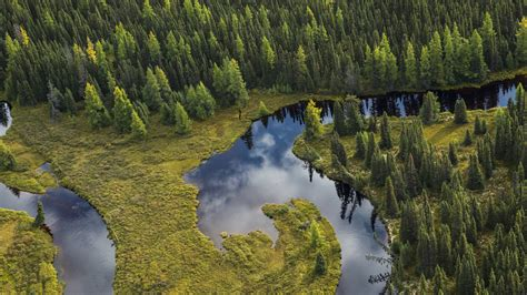 Boreal Forest Canadian Boreal Forest Agreement