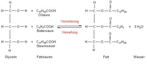 Aufbau eines fettmoleküls