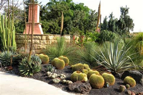 landscaping with cactus the best types of cactus to grow in your garden