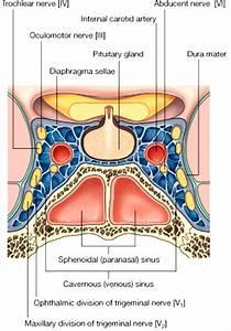 Pituitary and Hypothalamus I - Medical eBooks - Free High ...