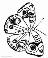 Coloring Pages Moth Butterfly Printable Insect Butterflies Insects sketch template