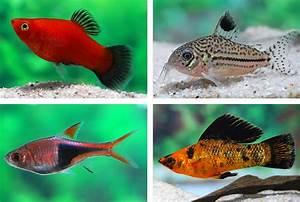 Fische Für Anfänger : fische f r anf nger my fish ~ Orissabook.com Haus und Dekorationen