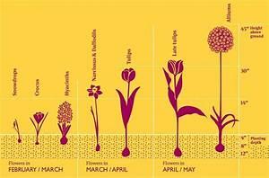 Gardening Guide Diagram