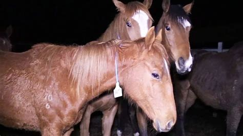 petition horse racing   unethical sport    banned   safer  australia