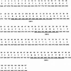Nucleotide And Amino Acid Sequences Of The Invariant Human