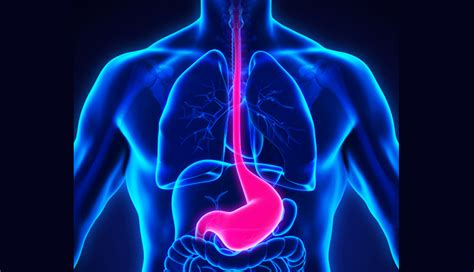 alcohol consumption obesity raise risk  esophageal