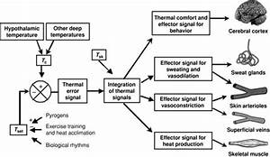 Schematic Diagram Of The Thermoregulatory Control System  Tsk