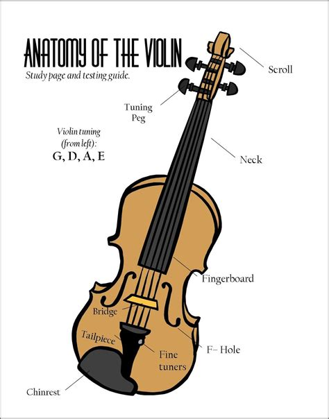 parts   violin poster google search  images