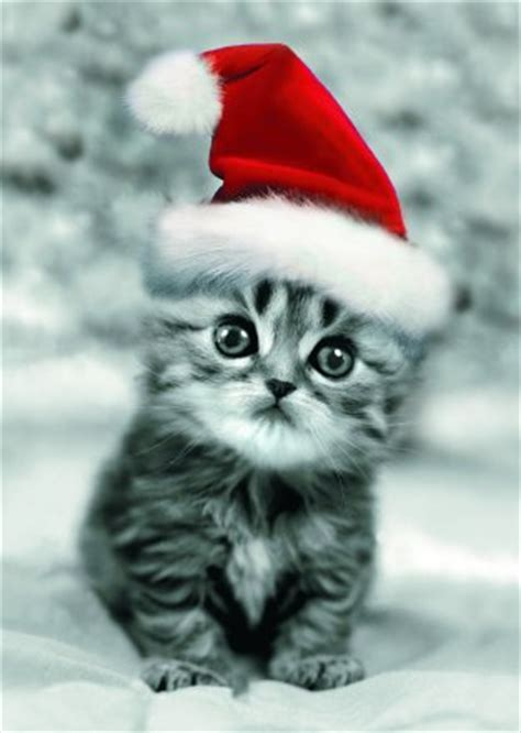 xmas kitten christmas myniceprofilecom