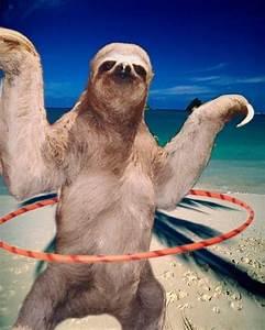 Sloth Meme, Dirty and Funny Sloth Memes