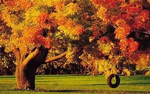 late autumn desktop themes hd wallpapers widescreen ...