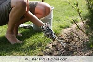 Unkraut Zwischen Pflastersteinen : unkrautbek mpfung unkraut auf wegen und gehwegplatten ~ Michelbontemps.com Haus und Dekorationen