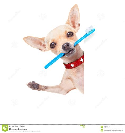 Dog food business plan