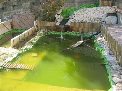 plante de bassin exterieur conseil pour plante aquatique dans bassin