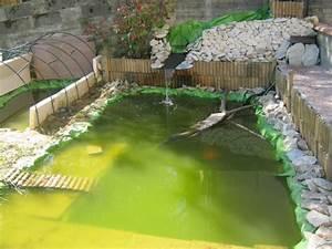 Plante Pour Bassin Extérieur : conseil pour plante aquatique dans bassin ~ Premium-room.com Idées de Décoration