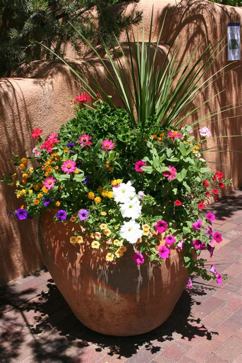 container garden ideas sun find this pin and more on container garden flowers for