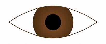 Eye Clipart Eyes Brown Clip Doe 2681