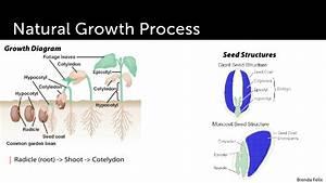 Plant Growth  U0026 Development