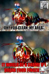 Mantis Shrimp      By Recyclebin