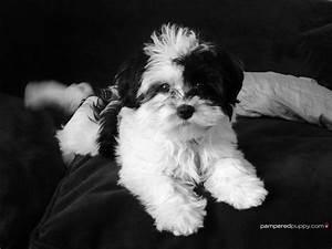 Black and White Dog Wallpaper - WallpaperSafari