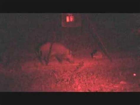 Hog Lights by Hog At With Sniper Hog Lights