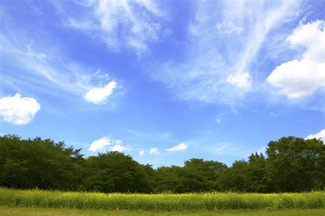 green grass and tree field and cloudy sky free image peakpx