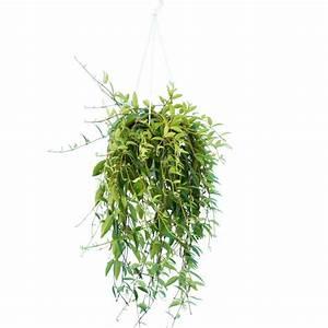Plantes à Suspendre : plante verte appartement ~ Premium-room.com Idées de Décoration