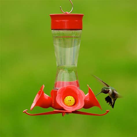 hummingbird feeder recipe hummingbird feeder recipe feeding the birds