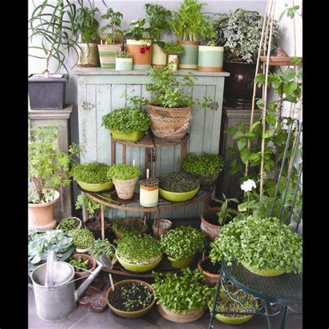 garden decoration queenstown microgreens a growing trend otago daily times news
