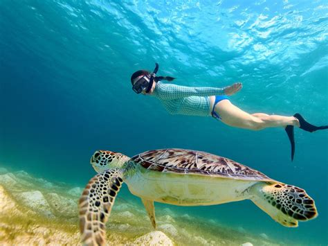 3 gili islands lombok snorkeling tour with private boat