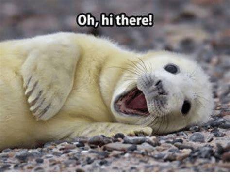 Hi There Meme - oh hi there meme on sizzle