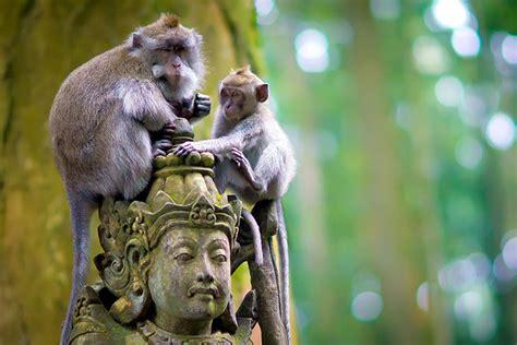 objek taman wisata alam sangeh monkey forest bali bali