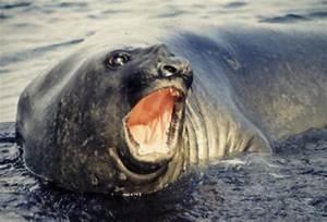 The Open Door Web Site : Biology : Air-breathing Aquatic ...