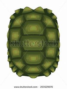 Turtle Shell Stock Images, Royalty-Free Images & Vectors ...