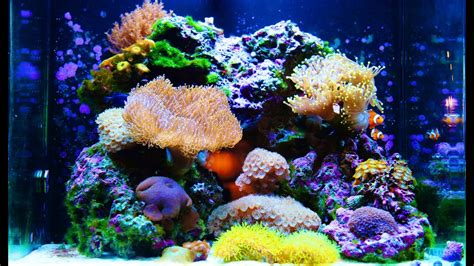 Nuvo 30 Gallon Amazing Aquarium HD - YouTube