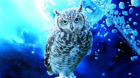 owl wallpaper  background image  id