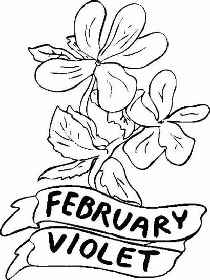 Coloring Pages Flower February Violet Flowers Printable