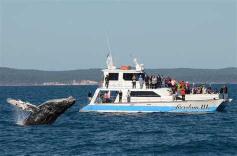 Fishing Boat Charters Hervey Bay by Freedom Iii Whale Watch Fishing Dive Charters In Urangan