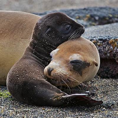 Galapagos Sea Lion Mother and PupSean Crane Photography