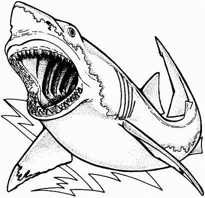 Bull Coloring Shark Pages Bucking Printable Getcolorings