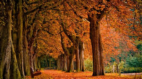 Autumn Fall Desktop Backgrounds by Fall Desktop Backgrounds 1920 215 1080 Autumn Desktop