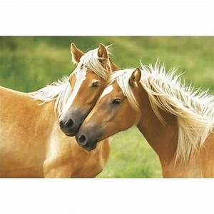poster deux chevaux achat vente affiche cdiscount With affiche chambre bébé avec tapis acupression avis