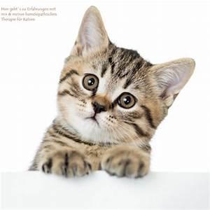 Katzen Fernhalten Von Möbeln : hom opathie f r katzen ~ Michelbontemps.com Haus und Dekorationen