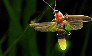 Indiana Senate Votes Unanimously To Make Firefly State